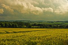 Ein Unwetter zieht auf (günter mengedoth) Tags: landschaft wolken feld gerste pentax samyang35mm manuell