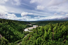 Views of the Chulitna River and a Forest of Green to Mountains Beyond (Denali State Park)