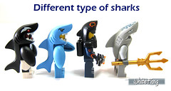 Different type of sharks (WhiteFang (Eurobricks)) Tags: lego collectable minifigures series city town space castle medieval ancient god myth minifig distribution ninja history cmfs sports hobby medical animal pet occupation costume pirates maiden batman licensed dance disco service food hospital child children knights battle farm hero paris sparta historic ninjago movie sensei japan japanese cartoon 20 blockbuster cinema