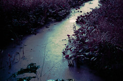flowering ditch (inmno) Tags: lomochrome purple lomography aerochrome minolta ishootfilm