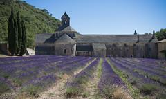 Abbaye Notre-Dame de Senanque (Gordes, France) (jen.ivana) Tags: lavender abbey sun sky building stone history field purple