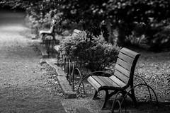 DSC_9161 (miggumigu) Tags: park chair bench