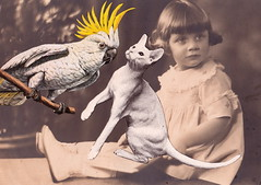 The Taunting (Angie Naron) Tags: art collage collagebyangienaron cockatoo cat littlegirlwithbook foundphoto