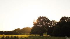 e (Herrjee) Tags: kiel sun sunny summer sonne sommer nature natur tree trees baum bäume