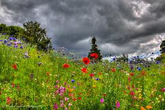 Nymans Gardens, National Trust (Mark Leppard) Tags: hdr canon canoneos6d canoneos nymansgardens nymans westsussex summer sussex garden gardens lightroom5 photomatix