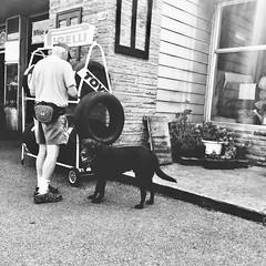 J'attends toujours après lui... (woltarise) Tags: garage outremont montréal chien curiosité streetwise moldiv