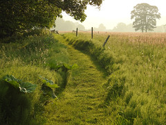Serenity (Lancashire Lass :) :) :)) Tags: quote countryside nature summer july green sunshine evening grass fence mist trees alston lancashire ribblevalley path track