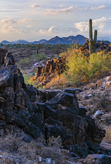 Dreamy Draw Study: 5 (zwainhaus) Tags: phoenix arizona cactus desert rocks light sunset nikon tamron