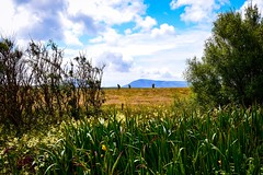 Distant Hills (rustyruth1959) Tags: nikon nikond3200 tamron16300mm scotland uk orkney hoy stones stenness field grass flowers fence hills stonesofstenness rspb neolithic outdoor landscape sky clouds tree shrub iris explore explored inexplore