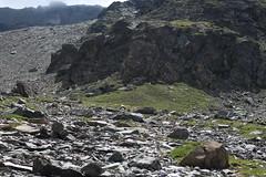 zoomez il y a un chamois en centre de la photo sous la barre rocheuse dans la limite du vert :) (bulbocode909) Tags: valais suisse mottec zinal valdanniviers vallondebarneuza coldesarpettes chamois montagnes nature rochers vert