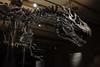 Tristan the T-Rex (timnutt) Tags: german fossil urban neuesmuseum trex skeleton museum bones germany city tyrannosaur dinosaur berlin naturalhistory