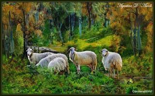 Pecore nel bosco - Luglio-2017