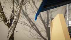 Quiet Shadows (Theen ...) Tags: awning bare blue branches cafe canvas hobart lumix salamancaplace shadow sun theen tree wall winter yellow