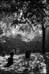 Old basque cemetery in Espelette (Romain Massola) Tags: paysbasque paisvasco euskalherria euskadi cimetiere cemetery graveyard espelette ezpeleta feuillage folliage lumiere light contrejour backlight arbre tree soleil sun leica m6 canon 50mm canon50mmf14ltm ilford hp5 bw nb blackandwhite noiretblanc bwfp epson v700 epsonv700 rodinal