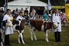 Canterbury_Farmers_016