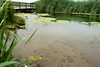 20170711_171049-X-T2-6096.jpg (Erwin Schoonderwaldt) Tags: water castricum dunes green netherlands clear landscape pwn