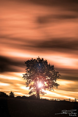 Sunset tree. (PvRFotografie) Tags: belgium belgië nature natuur light lichtval zon zonsopgang sun sunlight sunset sundown orange oranje filter boom tree trees bomen minolta 20mm minoltaaf20mmf28 sonyilca99m2 leesw150 leesuperstopper
