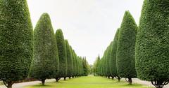 Cultivated Trees ,Groningen stad,the Netherlands,Europe (Aheroy) Tags: landscape landschap groningenstad groningen trees bomen green groen bomenlaan laan park paisaje paysage minimalism