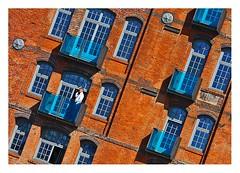 téléphoner au calme (Marie Hacene) Tags: hamburg hambourg ville immeuble balcon fenêtres rue