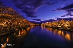 FXT24323 (kevinegng) Tags: japan aomoriprefecture hirosaki hirosakicastlepark sakura cherryblossom 日本 青森県 弘前市 弘前公園 nightphotography nightscene nightsakura 夜桜 bluehour reflection moat river