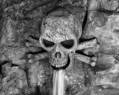 skull (timgaston) Tags: skull pirate crossbones
