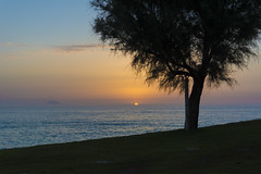 hotel tree (pat.netwalk) Tags: copyrightpatrickfrank bildgutch color italy holliday sea tree calabria
