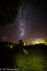 Skippy in the starlight (Mick Fletoridis) Tags: