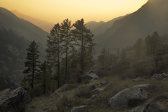 golden meadows of kalkatiyadhar (dr_zook81) Tags: meadow sunset light color india uttrakhand landscape tree pine fir forest hill mountain trekking travel nature canon6d depth wide rock land uttarkashi mist himalayas