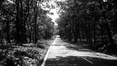 Lonely summer (m..k..) Tags: black bw forest drive jungle trees afternoon road roads shadow