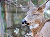 40 Winks (howardj47) Tags: howardj fuji wildlife