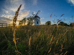 Time to Cut the Hay Down (RS400) Tags: ashton windmill somerset hay landscape cool wow amazing blue sky clouds travel cheadder grass long olympus photography golden hour sun set trees