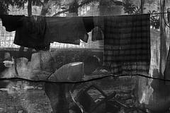 Daily Life (Rk Rao) Tags: streetstreetphotographyvegetablesseller peopleplacesstoriestruelifedailylifeblackandwhitecur newdelhi delhi india peopleplacesstoriestruelifedailylifeblackandwhitecurtainrkrao