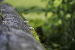 Mushroom (joka2000) Tags: mushroom tree macro