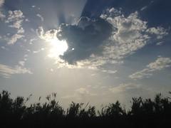 iph501 (gzammarchi) Tags: italia paesaggio natura ravenna santalberto passoprimaro parcodeltadelpo voltascirocco nuvola sole riflesso raggio canneto monocrome