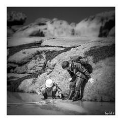 A la pêche aux coques (Martial F.) Tags: pêche coque coquillage shellfisch fishing bretagne brittany granitrose ploumanach pêcheàpieds noiretbanc blackandwhite