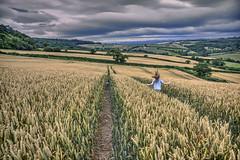 Running Wild 196/365 (rmrayner) Tags: runningdownafieldofwheat hdr landscape devon hills farm 365project 365the2017edition 196365 hss sliderssunday