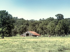 The Old Barn (clarkcg photography) Tags: landscape farm ranch woods trees forest hills oldbarn woodenbarn tinroof cattle field pasture sky saturdaylandscape 7dwf