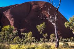 Uluru - Mutitjulu Waterhole-14