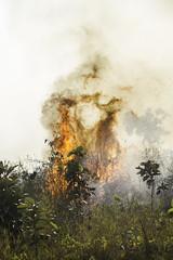 Burning Bush (Keith Kelly) Tags: anlongklong asia brushfire burningbush cambodge cambodia kh kampuchea keithkelly krakor pursatprovince sky southeastasia burning bush country countryside farmland field fire keithakelly rural pouthisat