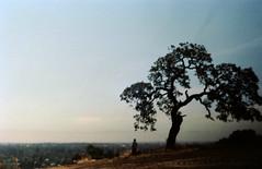 Sharon Heights (menloparkplanning) Tags: 19830630 sharonheights menlopark california historicalphoto scannedphoto sanmateocounty mp1980s 4000valparaisoave sharonhills