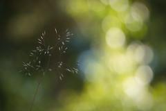 Tunnel of Light (Stefan Zwi.) Tags: light licht tunnel natur nature gras plant green grün grass ngc npc
