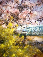 Into Spring (&Lynx1) Tags: iphone wakayama japan