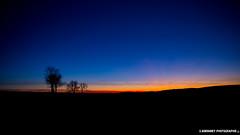 L'heure presque bleue (s.aubonney photographie) Tags: crépuscule sunset heurebleue paysage landscape france nuit night tree blue sky ciel bleu saubonney saubonneyphotographie