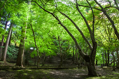 summer green (hs_8585) Tags: pentax k3ii da1650mmf28 hiroshima miyoshi 広島 三次