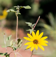 Yellow Flower (svubetcha) Tags: landscape flowers arizona sunset bridge hourse mission gas utah