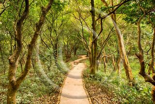 magic forest path