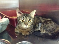 Tigger - 2 year old spayed female