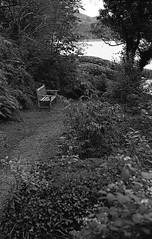 Another Bench Lochalsh Woodland Walk (Man with Red Eyes) Tags: hp5 ilford m2 leicam2 summilux50mm pyrocathd v850 scotland kyleoflochalsh garden woodlandwalk lochalsh walk analog analogue silverhalide monochrome blackwhite bnw sunnysixteen film filmisnotdead filmtilidie softie rapidwinder balmacara bench