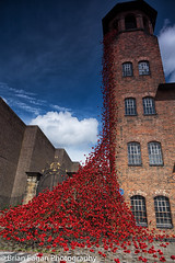 Poppies at the Mill (brianfagan) Tags: 2017 6d brianfagan brianfaganphotography canon derby derbyshire eos flood july mill nottingham poppies poppy red silkmill tour uk