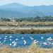 Flamingos (moni-h) Tags: halbinselgiens juni2017 lalondelesmaures mittelmeer natur olympusm14150mmf4056ii olympusomdem5markii paca provence radtour südfrankreich wasser hyères provencealpescôtedazur frankreich fr flamingos étangdespesquiers